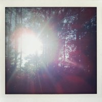 Sunlight Through The Trees fine art by cloud9designstudio on Etsy