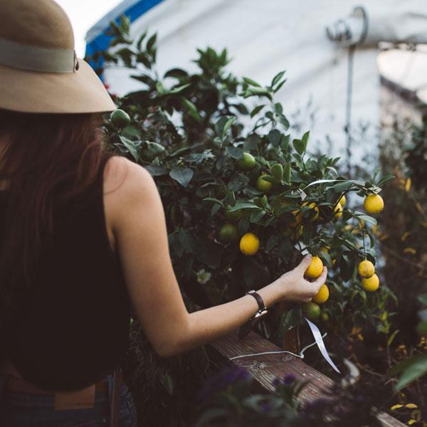 An-Ode-to-Gardening
